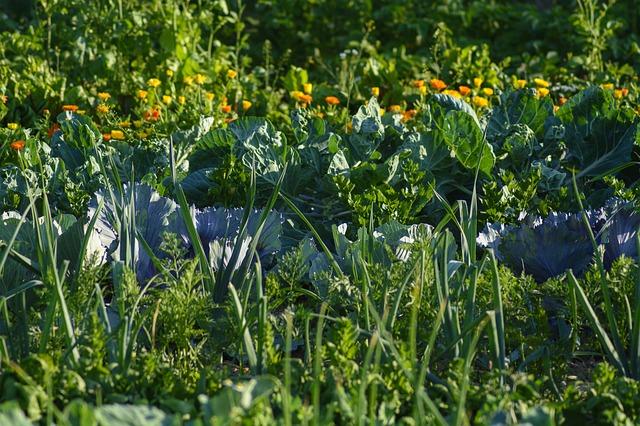 https://pixabay.com/photos/vegetables-vegetable-patch-food-eat-3507843/
