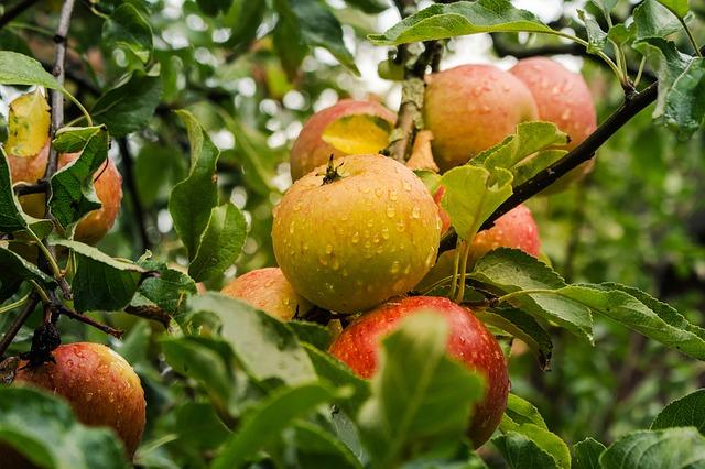 https://pixabay.com/photos/apple-fruit-harvest-ripe-food-4055926/