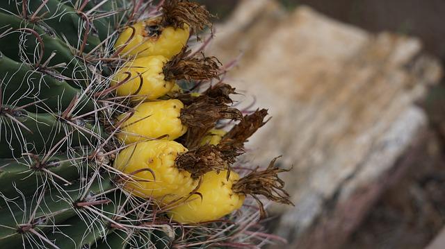 https://pixabay.com/photos/cactus-foe-so-cute-tucson-1082435/