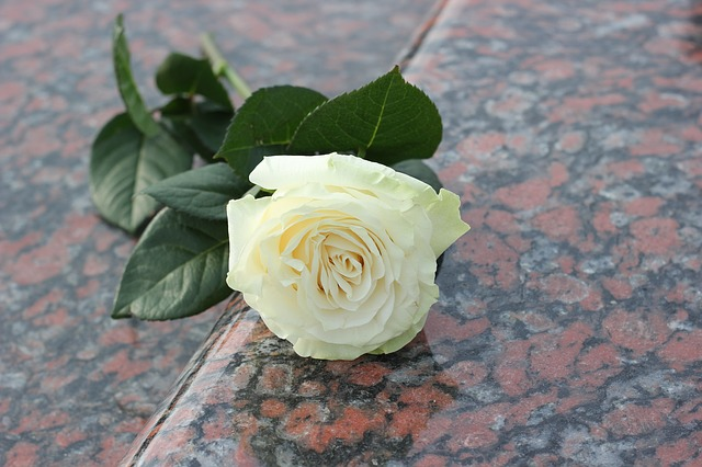 https://pixabay.com/photos/white-rose-purity-red-marble-2281820/