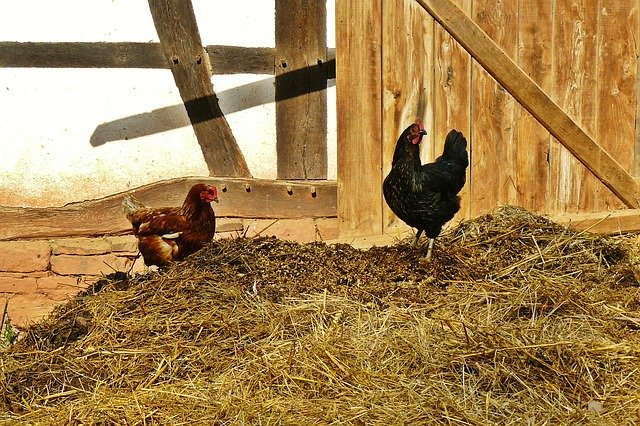 https://pixabay.com/photos/chickens-farm-dung-agriculture-953611/