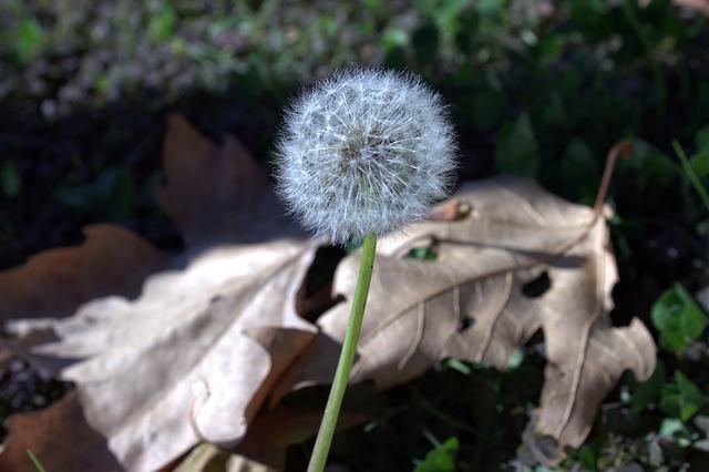 https://pixabay.com/photos/flower-nature-pollen-istanbul-2864680/