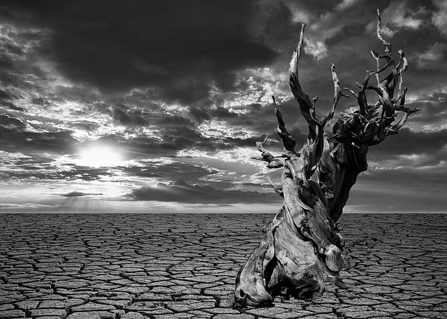 https://pixabay.com/photos/drought-earth-dry-desert-nature-4721400/