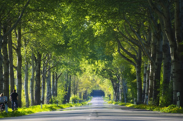 https://pixabay.com/photos/tree-lined-avenue-trees-avenue-3791988/