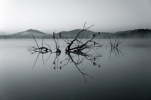 https://pixabay.com/photos/nature-reserve-africa-lake-silent-375609/