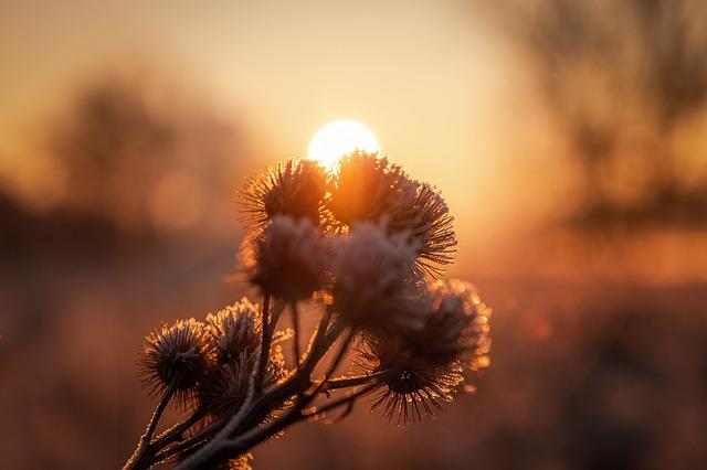 https://pixabay.com/photos/sun-sunrise-diestel-mood-romantic-3987934/