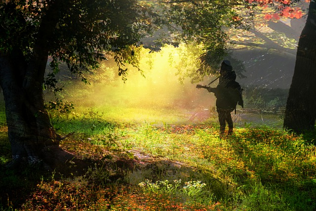 https://pixabay.com/de/photos/morgen-licht-sonne-sonnenaufgang-4815307/