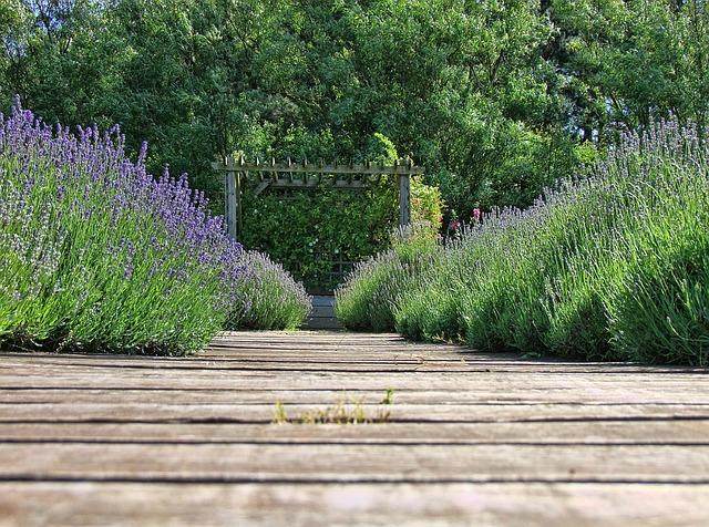 https://pixabay.com/de/photos/lavendel-natur-lila-blume-kraut-1497179/