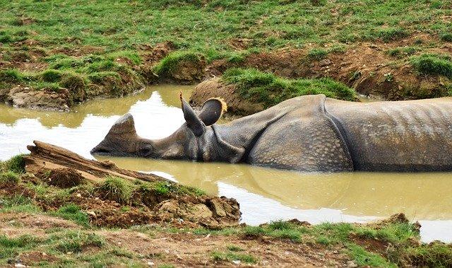 https://pixabay.com/de/photos/nashorn-afrika-tier-gro%C3%9F-erhaltung-3801149/