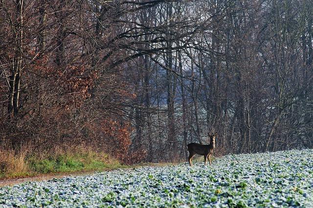 https://pixabay.com/de/photos/reh-wald-feld-wild-rehkitz-hirsch-4732584/