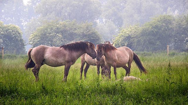 https://pixabay.com/de/photos/familie-liebe-wiese-pferde-tier-3496922/