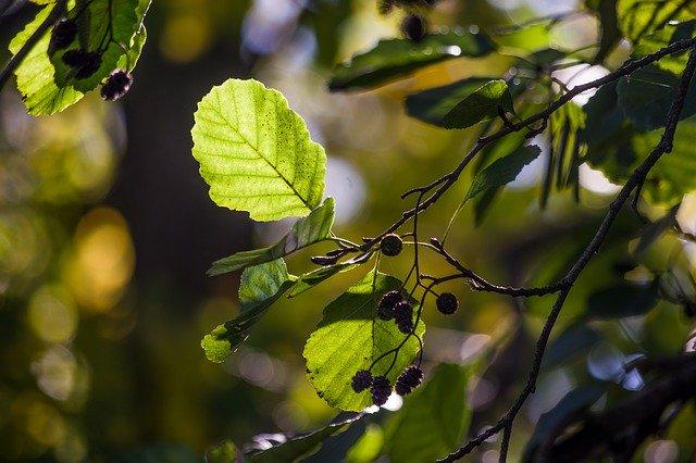 https://pixabay.com/de/photos/blatt-natur-pflanze-wachstum-baum-3154292/
