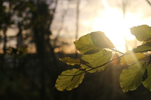 https://pixabay.com/de/photos/landschaft-sonne-sonnenuntergang-4241953/