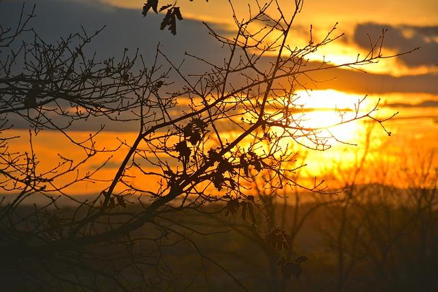 https://pixabay.com/de/photos/poetische-sonne-baumwipfel-wolken-5015382/