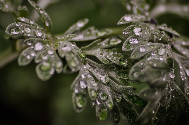 https://pixabay.com/de/photos/wermut-kraut-pflanze-bl%C3%A4tter-makro-4594015/