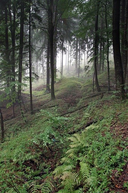 https://pixabay.com/de/photos/wald-der-nebel-baum-hang-gebirge-2815345/