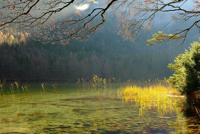 https://pixabay.com/de/photos/see-pflanzen-wasser-gras-wassergras-5750405/