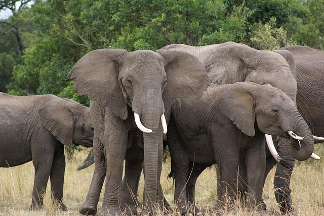 https://pixabay.com/de/photos/elefant-afrika-safari-natur-4721786/