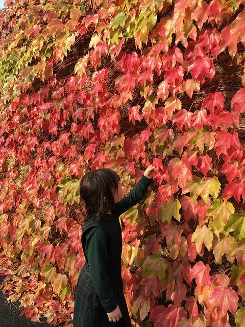 https://pixabay.com/de/photos/herbst-bl%c3%a4tter-rot-orange-natur-1342664/
