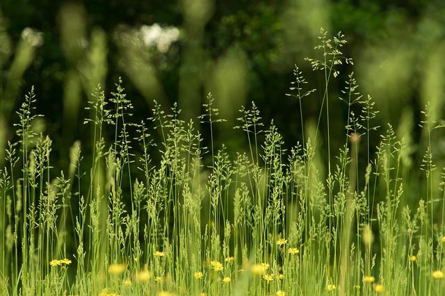 https://pixabay.com/de/photos/abstrakt-fr%c3%bchling-natur-3397116/