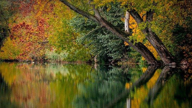 https://pixabay.com/de/photos/herbst-farben-farbig-bl%c3%a4tter-natur-994897/