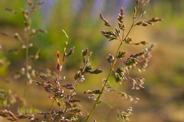 https://pixabay.com/de/photos/natur-pflanzen-gras-saatgut-stiele-5346409/
